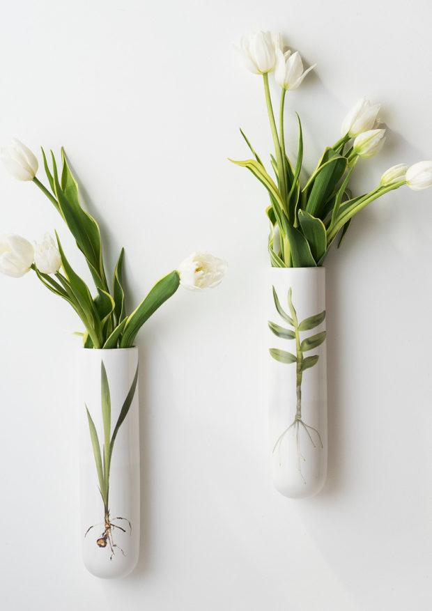 Angus & Celeste Test Tube Wall Vase Bulb Specimen and Root Specimen