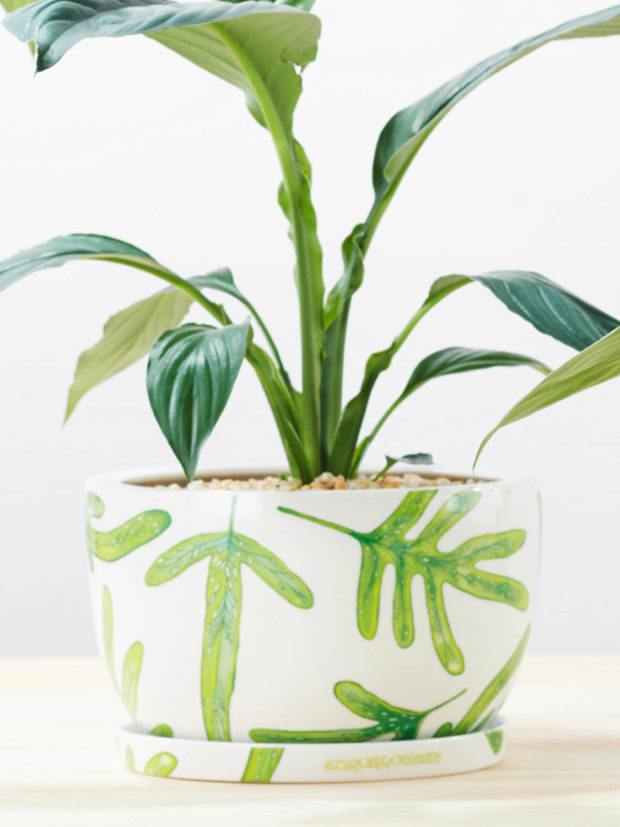 Angus & Celeste Monarch Fern Decorative Plant Pot