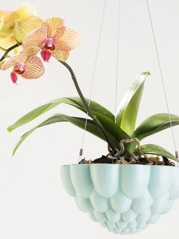 Angus & Celeste Round Jelly Hanging Planter Blue