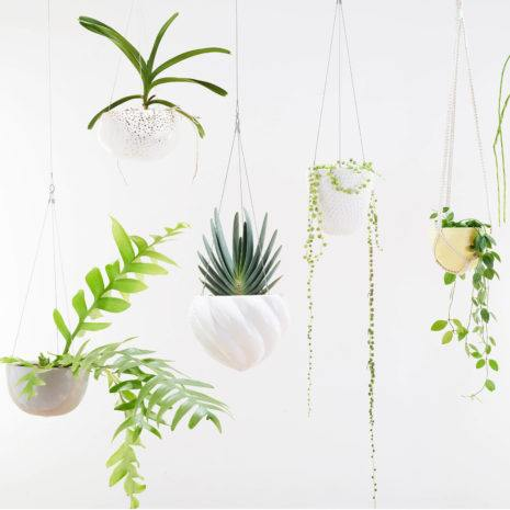 What are the benefits of Indoor Plants?