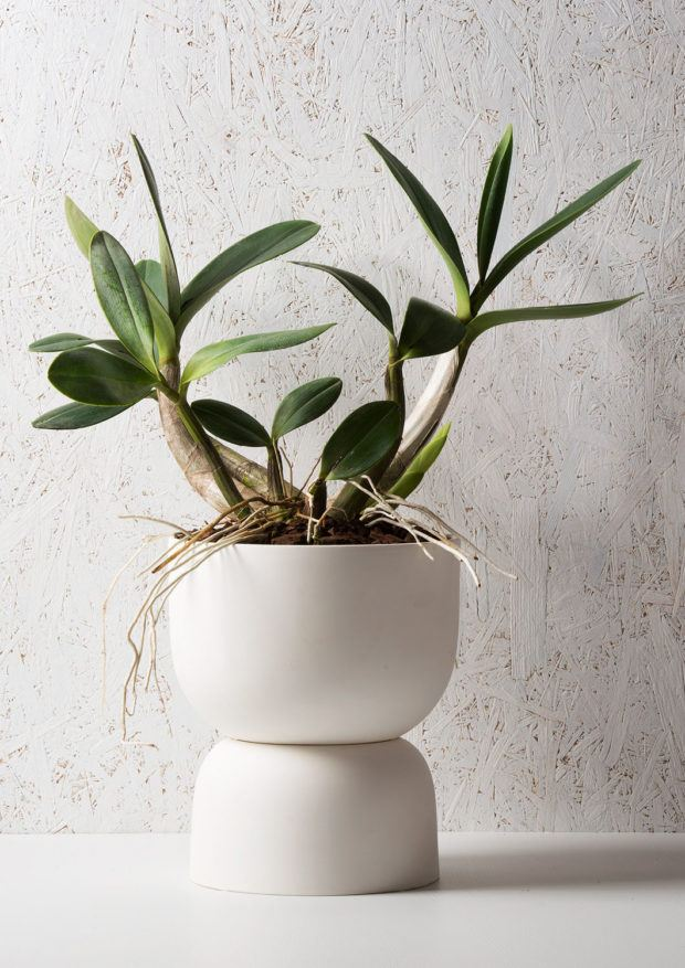 Angus & Celeste Raw Earth Plant Pot Chalk White