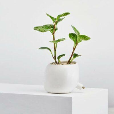 Spouted Plant Pots