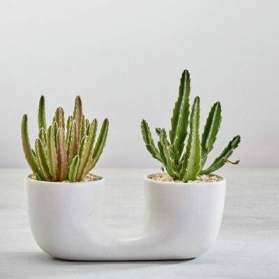 Connected Plant Pots