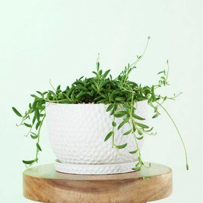 Embossed Plant Pots & Hanging Planters
