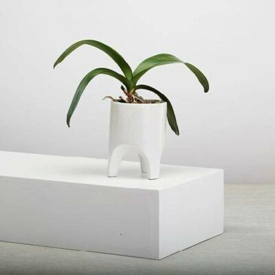 Arched Leg Plant Pots