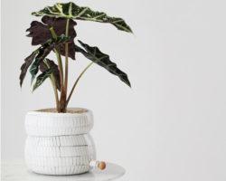 Angus & Celeste Plant Pod Pourer Pots Menu Tile