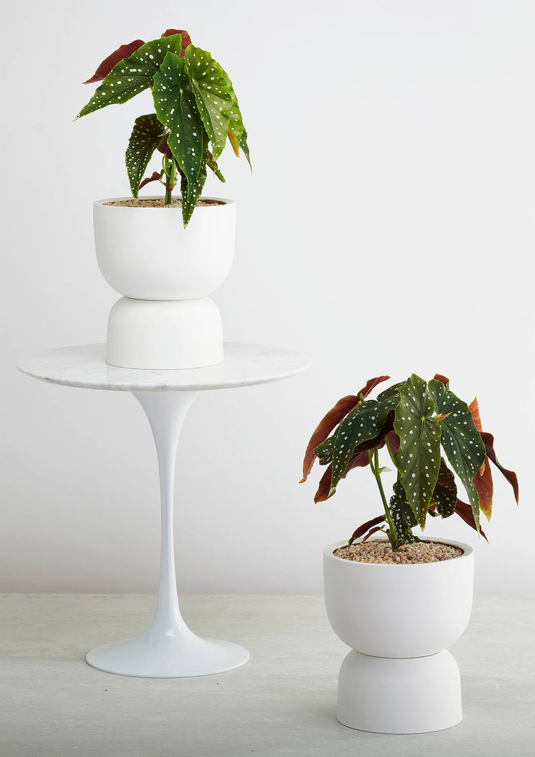 Angus & Celeste Raw Earth Plant Stand Pot Chalk White