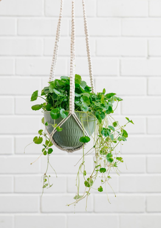 Angus & Celeste Macrame Hanging Planter Olive Green