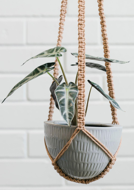Angus & Celeste Macrame Hanging Planter Grey