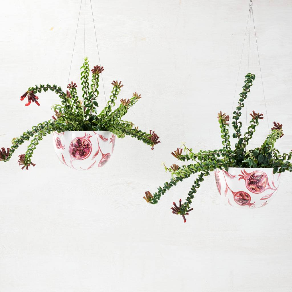 Pomegranate Hanging Planters by Angus and Celeste