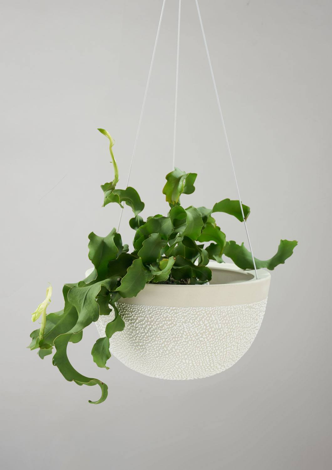 Angus & Celeste White Water Bead Hanging Planter Large