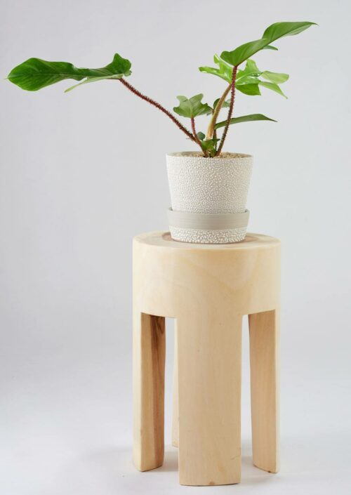Angus & Celeste White Water Bead Planter Pots Styled