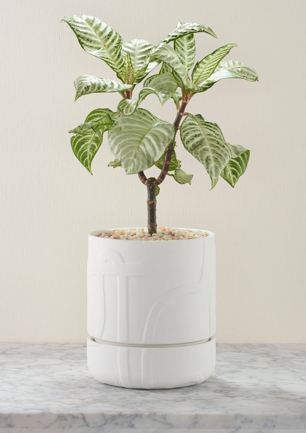 Angus & Celeste Abstract Relief Plant Pot - Brush Line Thick White Styled