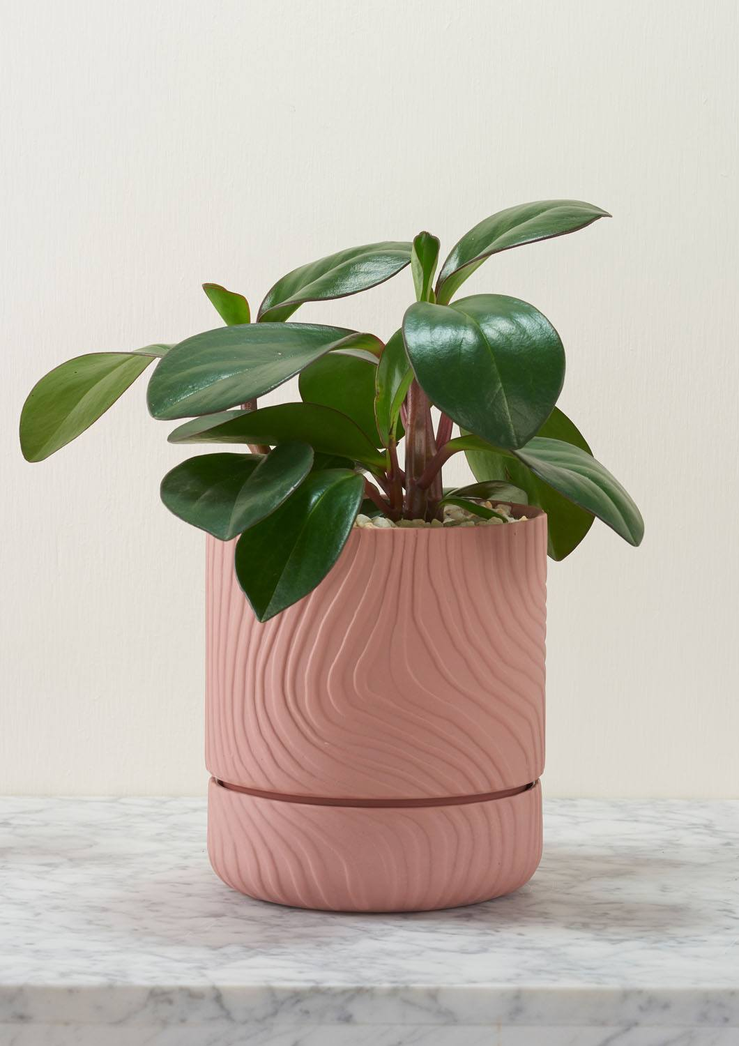 Angus & Celeste Abstract Relief Plant Pot - Brush Line Thin Ochre Styled