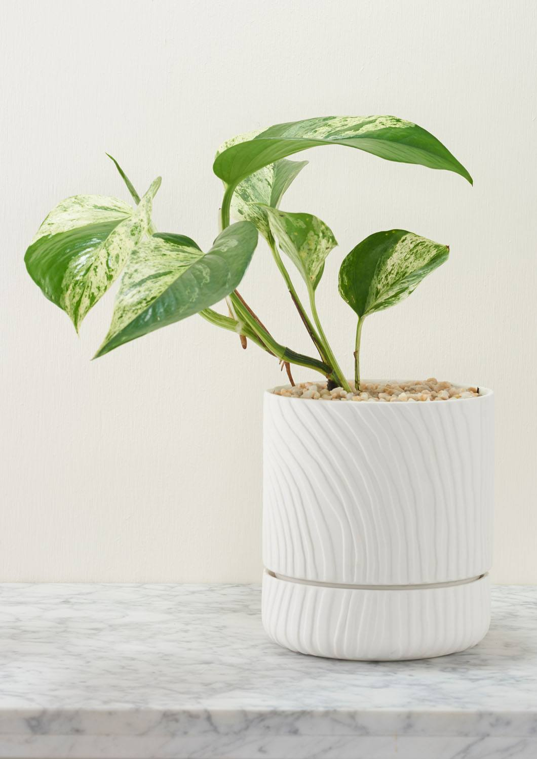 Angus & Celeste Abstract Relief Plant Pot - Brush Line Thin White Styled
