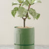 Angus & Celeste Abstract Relief Plant Pot - Brush Line Thick Olive Green Plant Pot Styled Image