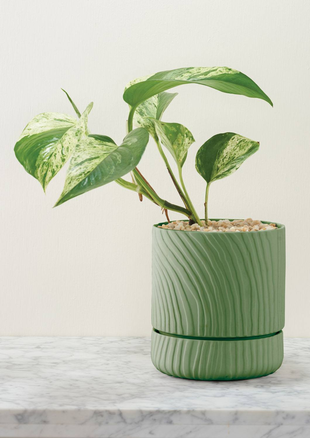 Angus & Celeste Abstract Relief Plant Pot - Brush Line Thin Olive Green Plant Pot Styled