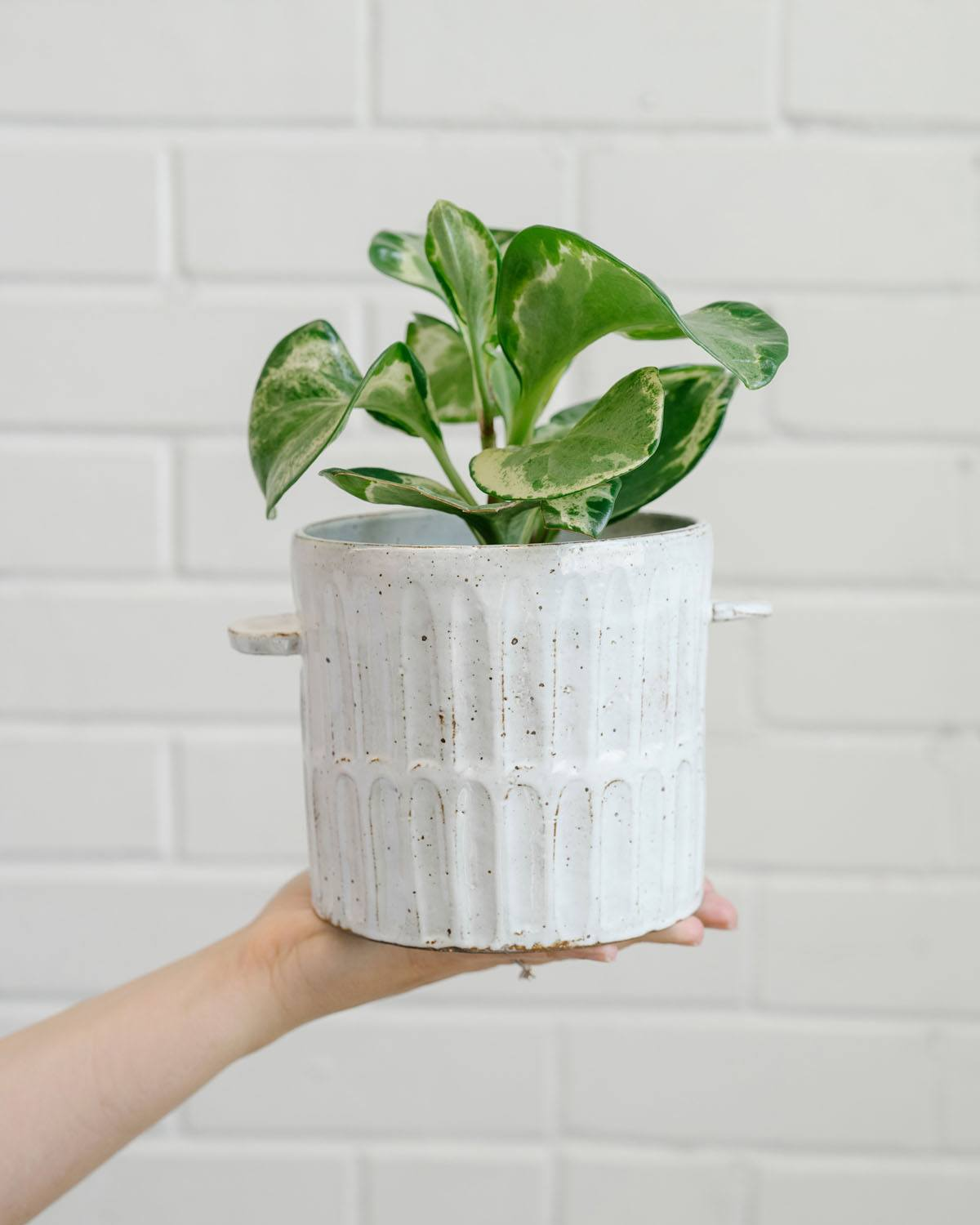 Angus & Celeste Milk Wash Artisan Plant Pot Styled Small Vertical Lines