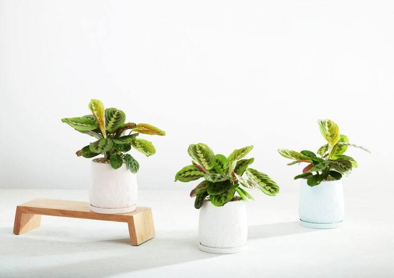 Relief Plant Pots