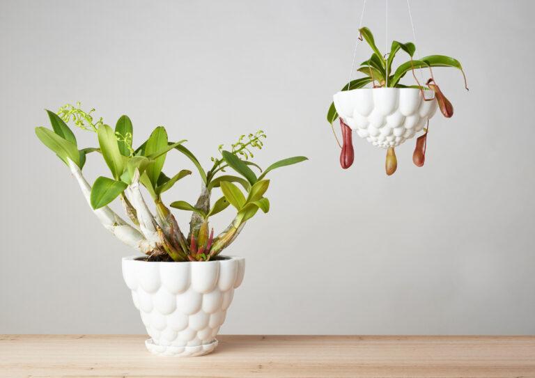 Jelly Plant Pots